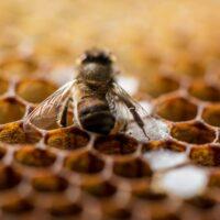 Ratujmy pszczoły